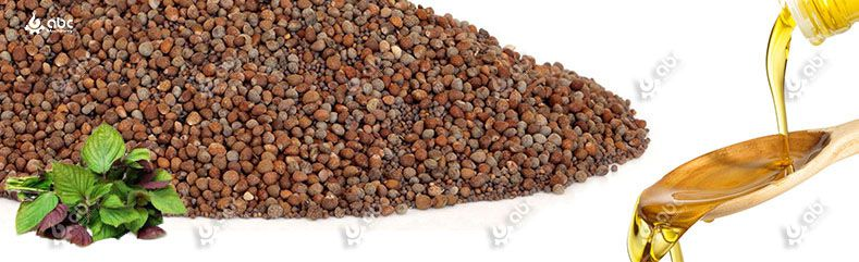 cold perilla seed-oil-extraction