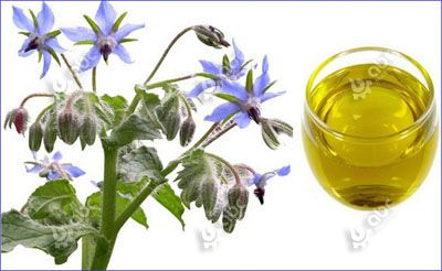 benefits of borage seed oil