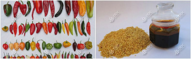 essential oil extraction from chilli seeds