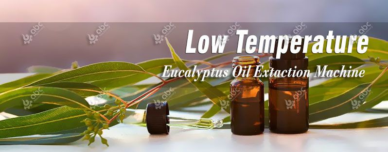 cold eucalyptus oil extraction technology