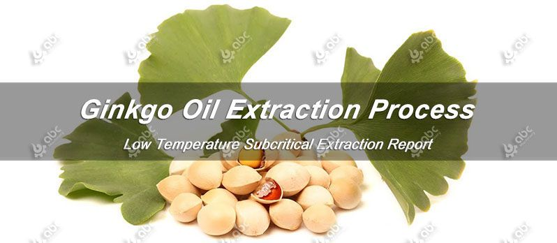 ginkgo oil extraction process and test report
