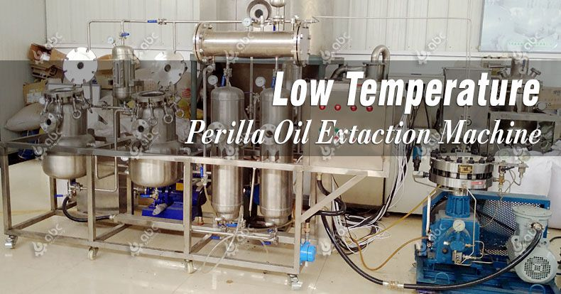 low temperature perilla oil extraction machine for small production