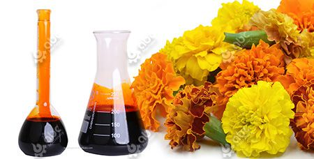 Oleoresin Extraction from Marigold