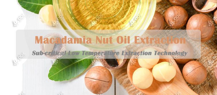 low temperature macadamia nut oil extraction technology