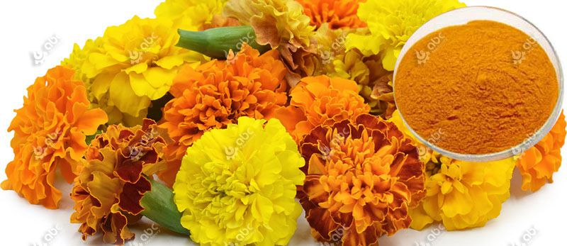 marigold flowers and extracts