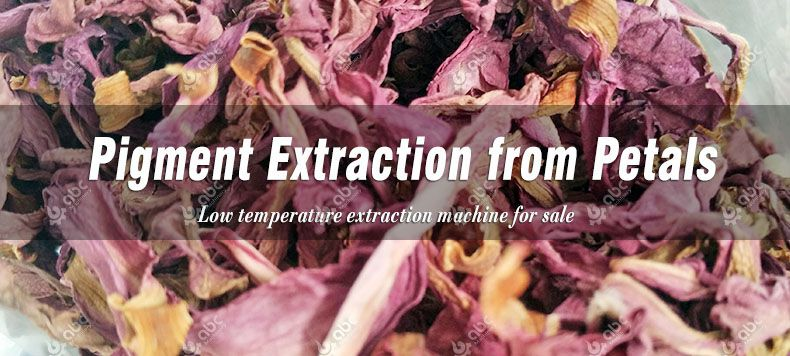 pigment extraction from petals