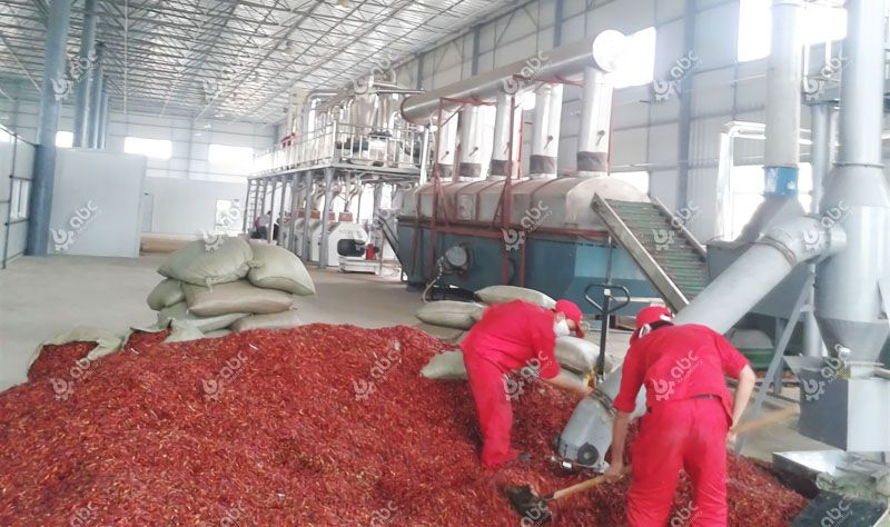 red chili pepper for capsicum pigment extraction