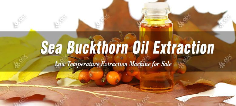 low temperature sea buckthorn seed oil extraction process